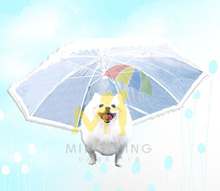 Umbrella Design for Dog